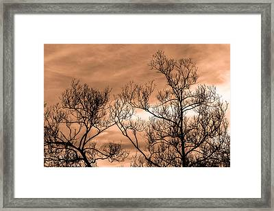 Whisper In The Trees Framed Print by Bob Orsillo