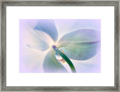 Whisper Framed Print by Jessica Jenney