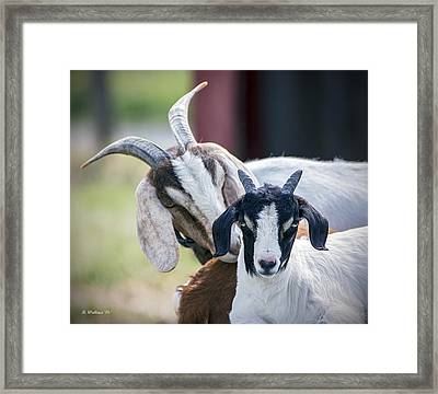 Whisper Sweet Nothings Framed Print by Brian Wallace