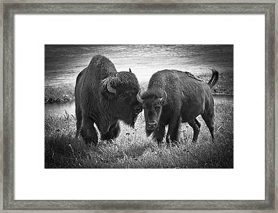 Framed Print featuring the photograph Whispering Bison by Thomas Gaitley