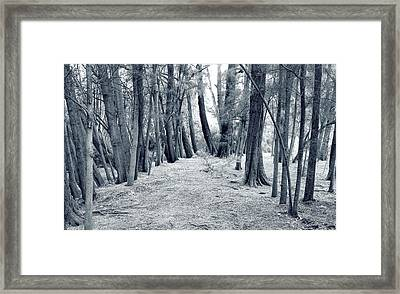 Framed Print featuring the photograph Whispering Forest by Wayne Sherriff