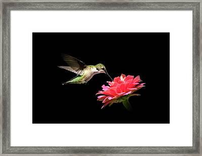Whispering Hummingbird Framed Print by Christina Rollo