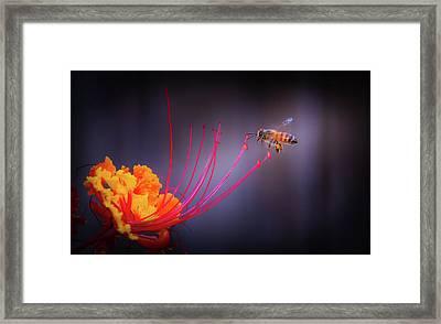 Whispering Wings 1 Framed Print by Mark Dunton