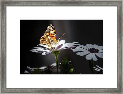 Whispering Wings II Framed Print