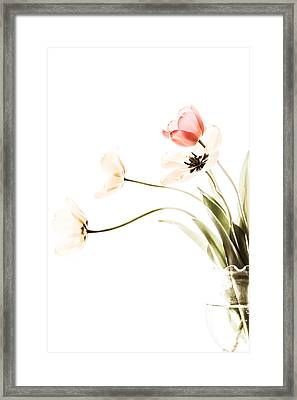 Whispers In The Morning  Framed Print by Maggie Terlecki