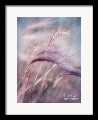 Whisper Framed Prints
