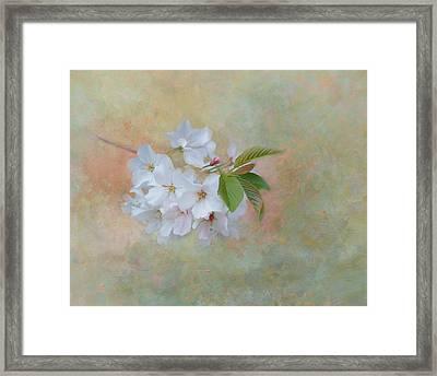 Whispers Of Spring Framed Print by Kim Hojnacki
