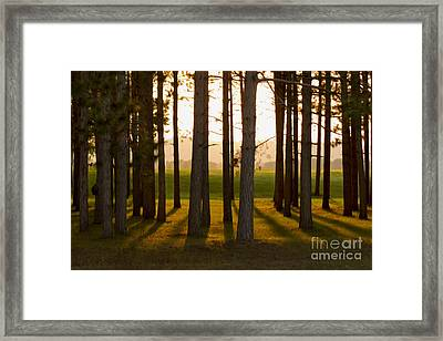 Whispers Of The Trees Framed Print