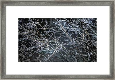 Whispers Of Winter Framed Print by Karen Wiles