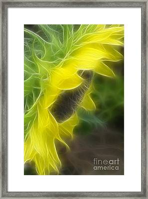 Whispy Petals Framed Print
