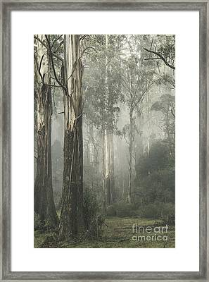 Whist Framed Print by Andrew Paranavitana