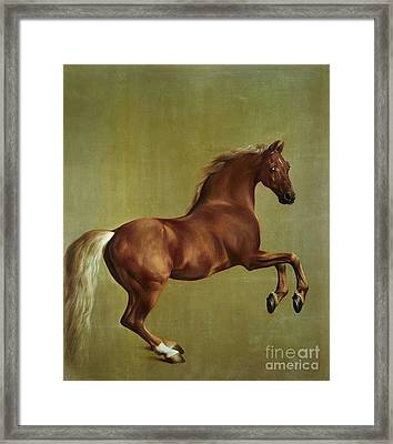 Whistlejacket Framed Print by George Stubbs