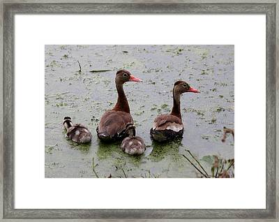 Framed Print featuring the photograph Whistling Ducks  by Christy Pooschke