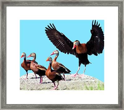 Whistling Ducks Framed Print