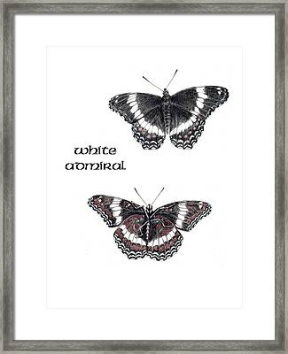White Admiral Butterfly Framed Print