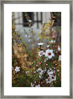 White Amidst It All Framed Print by Jean Booth