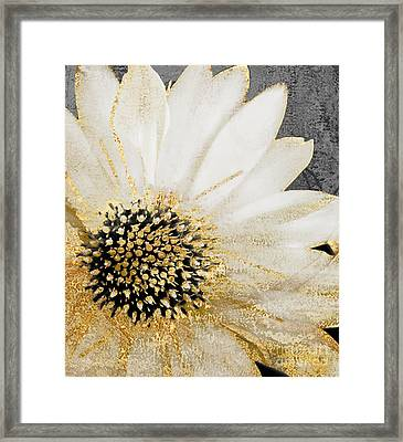 White And Gold Daisy Framed Print by Mindy Sommers