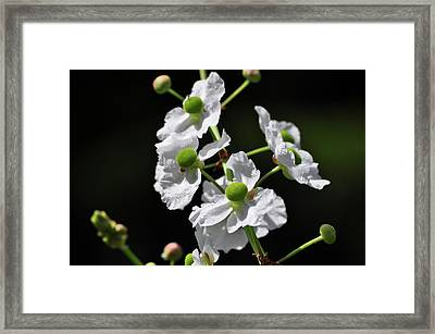 White And Green Wildflowers Framed Print