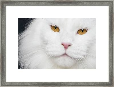 White And Ogange Framed Print