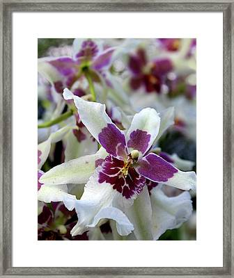 Purple And White Orchid Framed Print