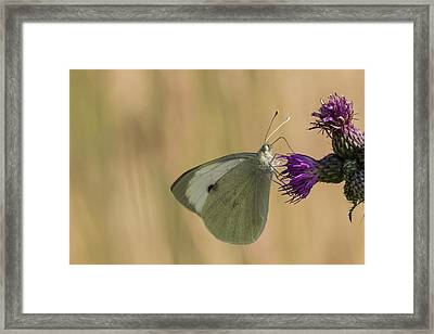 White And Purple Framed Print