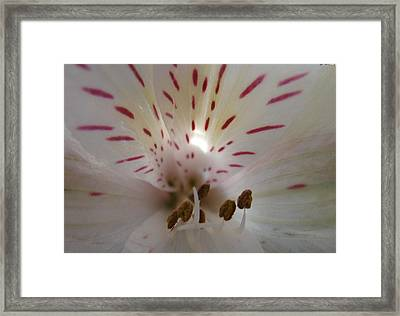 White And Wonderful Framed Print by Luciana Seymour