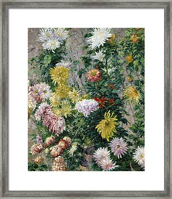 White And Yellow Chrysanthemums Framed Print by Gustave Caillebotte