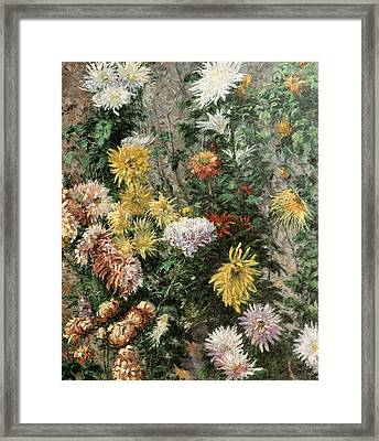 White And Yellow Chrysanthemums In The Garden At Petit Gennevilliers Framed Print by Gustave Caillebotte
