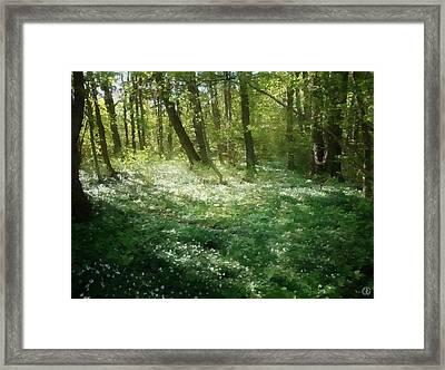 White Anemone Floor Framed Print