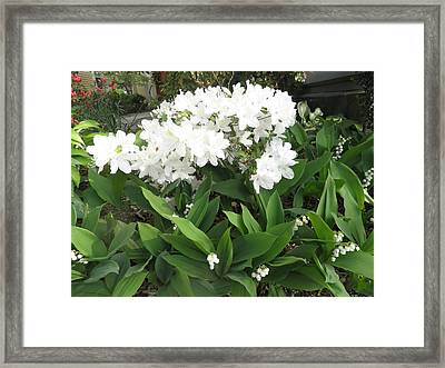White Azaleas And Lily Of The Valley Framed Print