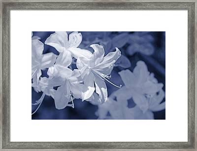 Framed Print featuring the photograph White Azalea Flowers Blues by Jennie Marie Schell