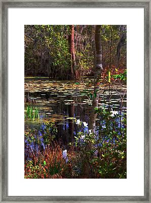 White Azaleas In The Swamp Framed Print by Susanne Van Hulst