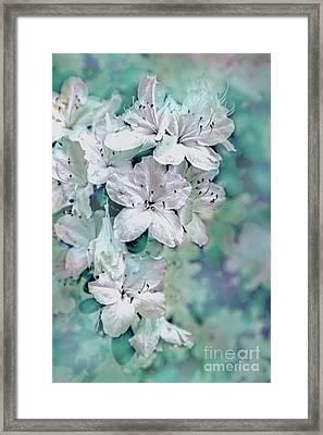 White Azaleas Framed Print