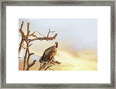White-backed Vulture Framed Print by Jane Rix