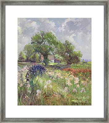 White Barn And Iris Field Framed Print by Timothy Easton