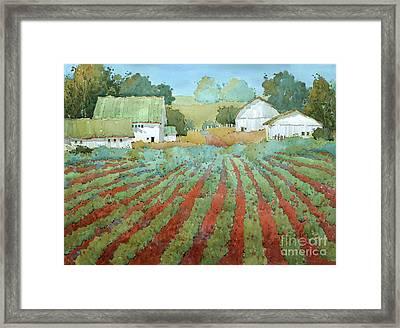 White Barns In Virginia Framed Print