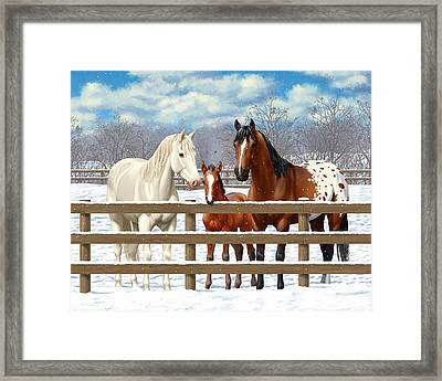 White Bay Appaloosa Horses In Snow Framed Print by Crista Forest