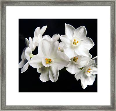 White Beauty Framed Print by Mary Lane