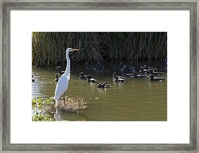 Framed Print featuring the photograph White Beauty by Phyllis Denton