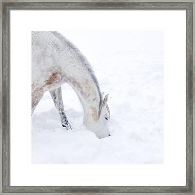 White Beauty #winter #white #snow Framed Print