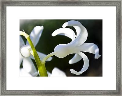 White Bell Framed Print by Svetlana Sewell
