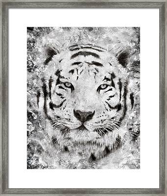 White Bengal Tiger Portrait Framed Print