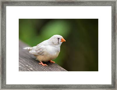 Framed Print featuring the photograph White Bird Standing On Deck by Raphael Lopez