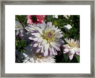White Bloom Framed Print by Colleen Neff