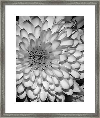 White Bloom Framed Print