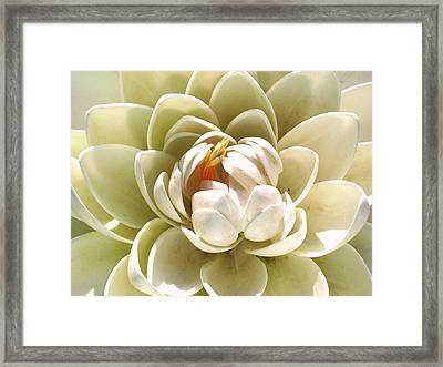 White Blooming Lotus Framed Print