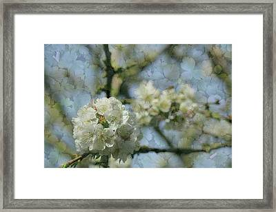 White Blossom Flowers With Leaves Texture Background Framed Print