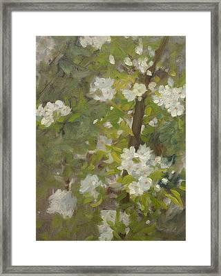 White Blossom Framed Print by Henry Scott Tuke