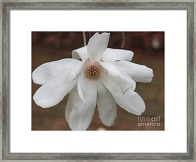 Framed Print featuring the photograph White Blossom by Rod Ismay