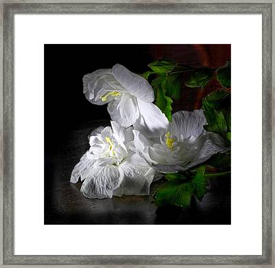 White Blossoms Framed Print